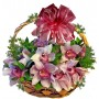Jasmin - Orchid in a basket