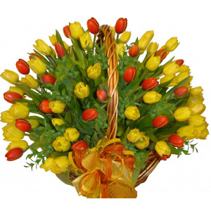 Tulips in a big basket ( from 49 to 99 items )