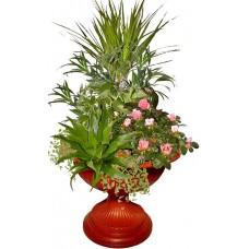 Афродита # 2 - Саксийни растения
