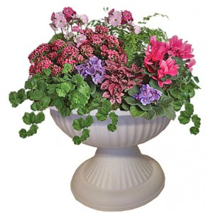 Blooming flowers in amphora