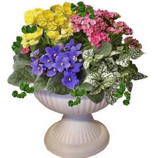 Цъфтящи цветя в амфора # 2