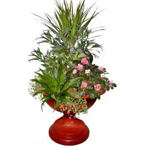 Aphrodite # 2 - House Plants