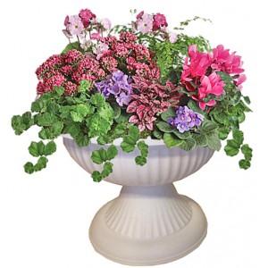 Blooming flowers in amphora
