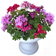 Mia - Blooming flowers in a small amphora