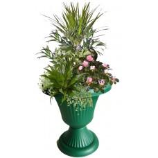 Афродита - Саксийни растения