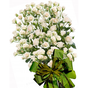 Olive - Spray roses