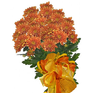 Astra - Chrysanthemum bouquet