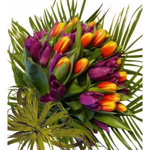 Sun dance between tulips