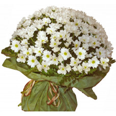 Daisy delight - chrysanthemum bouquet