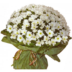 Daisy delight - chrysanthemum bouquet