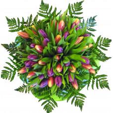 Kalliope - Tulip bouquet