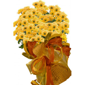 Briana - Chrysanthemum bouquet