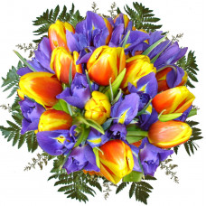 Sun dance between tulips and irises